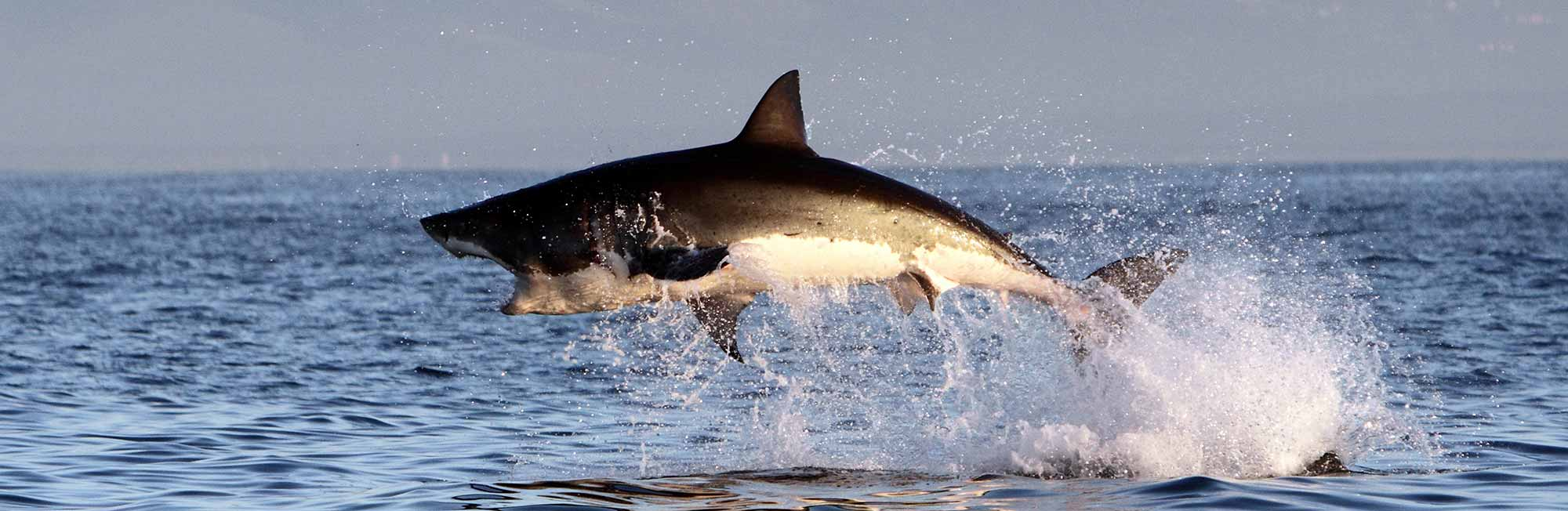 10 day great white shark trip
