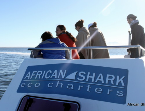 """Amazing experience"" shark diving with ASEC"