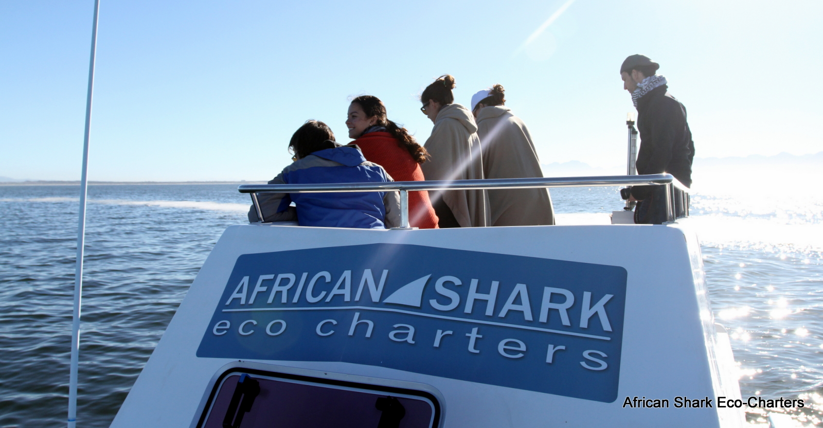 ASEC shark diving