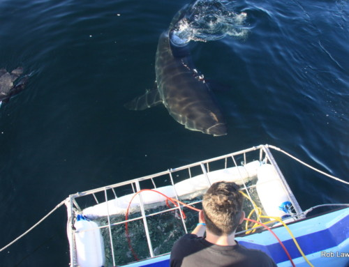 "AIRJAWS Shark Trip – ""Amazing trip! Would definitely do again!"""
