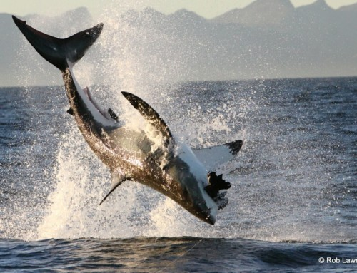 Reviews for African Shark Eco-Charters