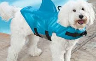 fin jacket on a poodle