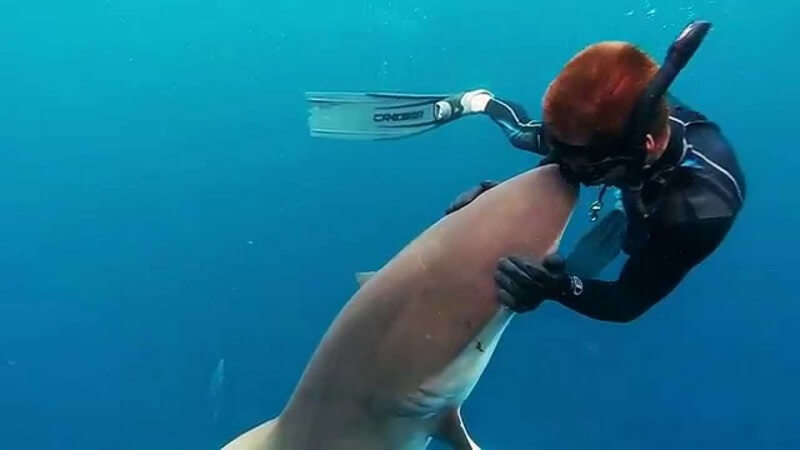 Diver kissing a Dusky Shark