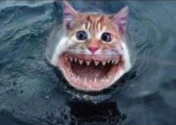 Silly mash up of a cat with shark's teeth in the ocean