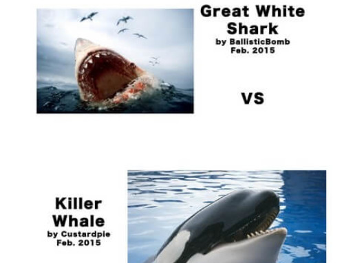 The Orca VS The Great White Shark