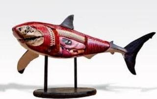 shark muscles figurine