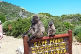 Baboons sitting on Cape Point Sign