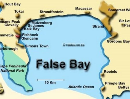 The Sharks of False Bay