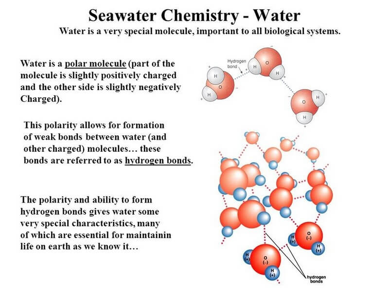 how is water important to life on earth