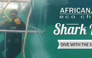 Shark cage diving: Dive with Shark Legend, Rob