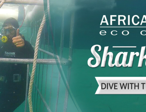 The Ultimate Guide To Shark Cage Diving in Cape Town, South Africa