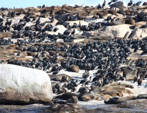 All About False Bay's Seal Island