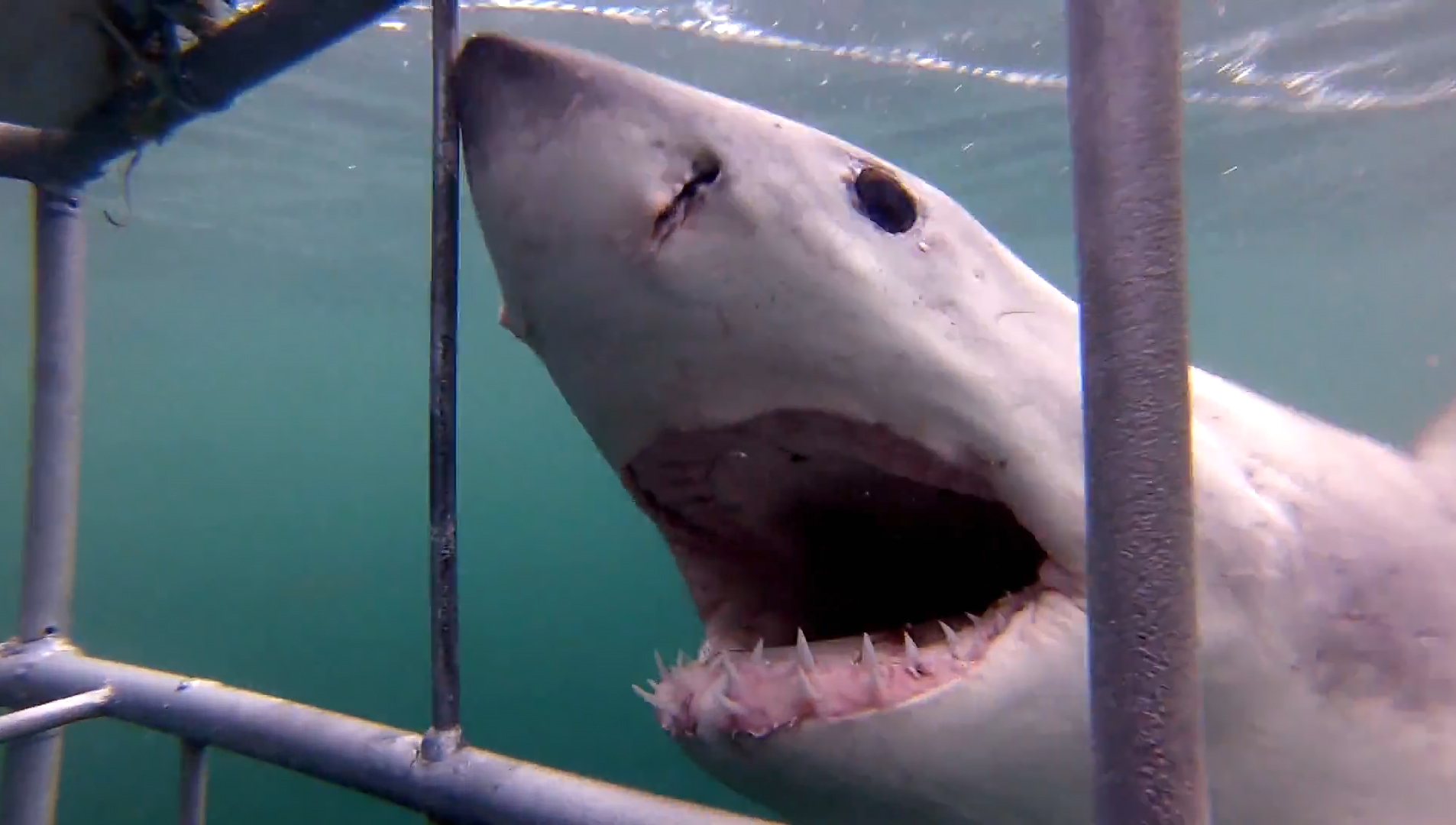 ASEC-GoPro Great White Shark Experience