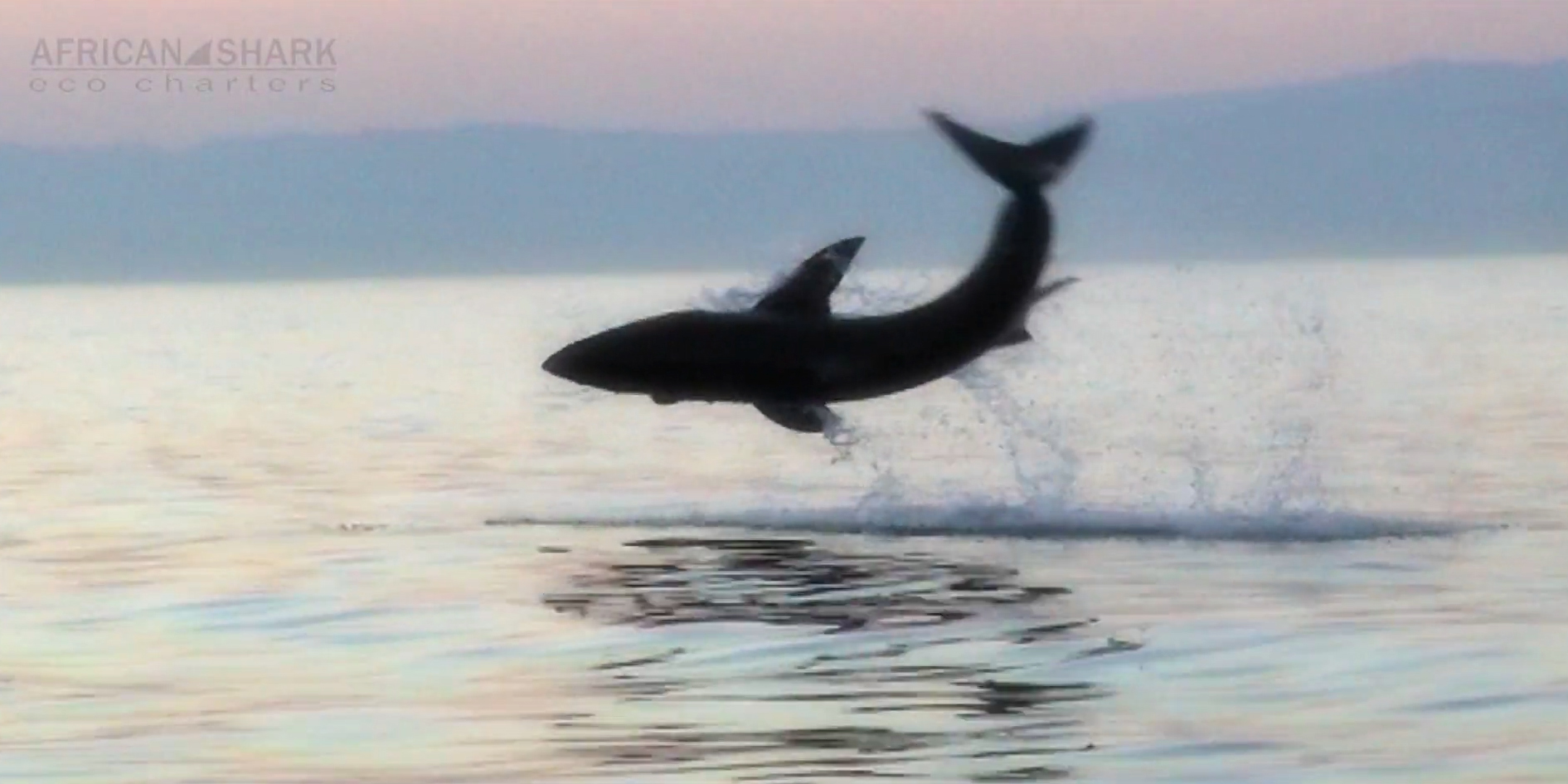 ASEC-You will believe that Sharks can fly!